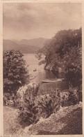 ISLAND SCENARY. TRINIDAD. F P BRUCE AUSTIN. CPA CIRCA 1920s - BLEUP - Trinidad