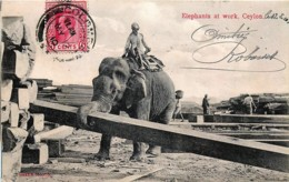 Sri-Lanka - Ceylon - Elephants At Work - Envoyé Vers Tien-Tsin Chine - Sri Lanka (Ceylon)