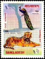 BIRDS-PEACOCKS-INDIAN PEAFOWL WITH ROYAL BENGAL TIGER- DHAKA ZOO- BANGLADESH-1984-MNH-A5-886 - Paons