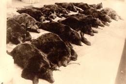 ROMANIA - BORSEC : CHASSE à L'OURS / BEAR HUNTING : 15 BEARS KILLED !!! - CARTE VRAIE PHOTO / REAL PHOTO - 1930 (aa916) - Caccia