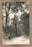 CPA - YPORT (76) - Thème : Arbre - Aspect Des Grands Chênes Sur La Route De Fécamp En 1918 - Yport