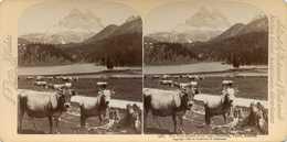 Austria ~ TYROL ~ Drei Zinnen Stereoview Jfjau47 - Stereoscopio