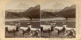 Austria ~ TYROL ~ Drei Zinnen Stereoview Jfjau47 - Photos Stéréoscopiques