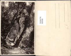 603938,Foto Ak Santos Ilha Porchat Wald Urwald Brasilien - Ansichtskarten