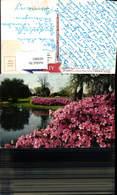 603883,Azaleas In Bloom Sylvan Abbey Clearwater And Safety Harbor Florida - Vereinigte Staaten