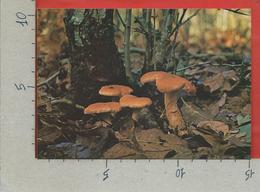 CARTOLINA NV ITALIA - CIRCEO - AZIENDA DI STATO FORESTE DEMANIALI - Steccherino Dorato - Funghi - 10 X 15 - Funghi