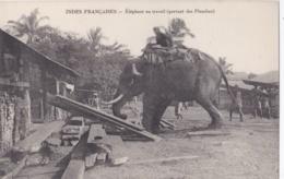 INDE INDIA  :  Eléphant Portant Des Planches - Inde