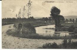 Avelghem Oude Schelde  (972) - Avelgem