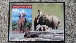CPM ELEPHANT THAI THAILAND THAILANDE THE NORTH ART MEDIA - Elefanti