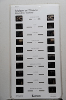 LESTRADE  MSM    80171  MAISON DE L'OISEAU : LANCHÈRES - SOMME - Stereoskope - Stereobetrachter