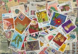 Motives 50 Different Cacti Stamps - Plants