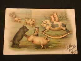 Animaux Cochon - Cochons