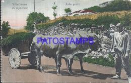 109501 SPAIN ESPAÑA VILLAFRANCA GUIPUZCOA PAIS VASCO AIDA GORRI COSTUMES MAN AND COW POSTAL POSTCARD - Sin Clasificación