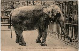 4OX 149 CPA - PARIS - MUSEUM D'HISTOIRE NATURELLE - L'ELEPHANT RACHEL - Elephants