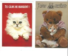 LES CHATS    CALINS    ****   A  SAISIR ***** - Katten