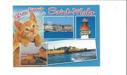 LES CHATS  GROS BISOUS DE SAINT MALO     ****   A  SAISIR ***** - Katten