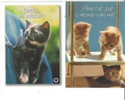 LES CHATS  PARTIE DE CACHE CACHE   +  COUCOU ME REVOILA   ****   A  SAISIR ***** - Katten