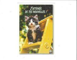 LES CHATS  J ATTENDS DE TES NOUVELLES    ****   A  SAISIR ***** - Katten