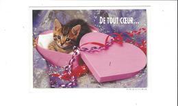 LES CHATS  DE TOUT COEUR  ****   A  SAISIR ***** - Katten