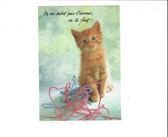 LES CHATS  ON NE SUBIT PAS L AVENIR   ****   A  SAISIR ***** - Katten