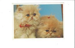 LES CHATS   CHATONS   ****   A  SAISIR ***** - Katten