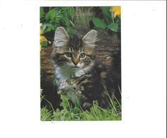 LES CHATS   CHATON   ****   A  SAISIR ***** - Katten
