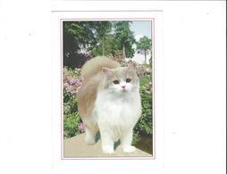 LES CHATS CHAT ****   A  SAISIR ***** - Katten
