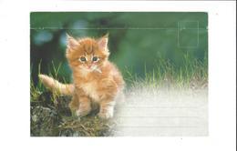 LES CHATS ENVLOPPE CHATON  ****   A  SAISIR ***** - Katten