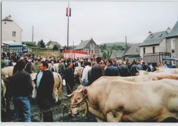 CPM 15 SAINT URCIZE ... Foire Du 9 Août 1991 (Livenais 090891) Marché Vaches Bestiaux - Autres Communes