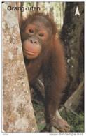 Singapore Old Phonecard Singtel Orang Utan Ape Used - Dschungel