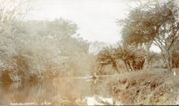 SOUTH AFRICA - Amansimtotl - Wood And Lake Scene - RPPC 1913 - South Africa