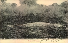 CROCODILE, Krokodil - Sent From Britsh Southafrica To Germany 1907 - Sin Clasificación