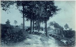 GENCK - Campine Limbourgoise - Genk