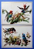 2 CHROMOS LITHOGRAPHIES  ....GRAND FORMAT....OISEAU DE PARADIS...HOUX....CARDES - Vieux Papiers