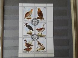 1972 Sharjah Birds (79) - Sharjah