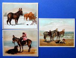 3 CHROMOS LITHOGRAPHIES  ......GRAND FORMAT....ÂNES ET CHEVAUX - Vieux Papiers