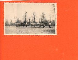 Chevaux - Attelage Labourage Terre   (dimensions Photo 11 X 6.7) - Paarden