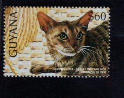 740904878 POSTFRIS  MINT NEVER HINGED EINWANDFREI SCOTT 3102I DOMESTIC CATS CORNISH REX - Guyane (1966-...)