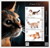 Kirgizië / Kyrgyzstan - Postfris / MNH - Sheet Cats 2019 - Kirgizië