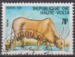 Faune - Animaux D'élevage - HAUTE VOLTA - Vache, Zébu - N° 565 - 1981 - Haute-Volta (1958-1984)