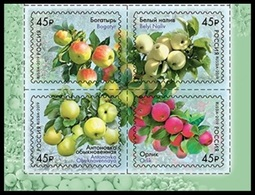 RUSSIA 2019 Stamp MNH ** VF Mi 2673-76 APPLE AGRICOLE AGRICULTURE APPLES POMME APFEL FRUIT FRUITS PLANT PLANTS 2456-59 - Nuevos
