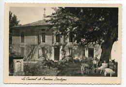 Bourrou Le Couvent (troupeau De Chèvres) - France