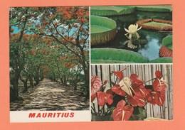 ILE MAURICE - LES FLAMBOYANTS ET FLEURS TROPICALES - Mauritius