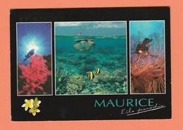ILE MAURICE - PAYSAGE SOUS MARINS - Mauritius