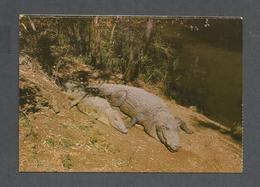 ANIMAUX - ANIMALS - CROCODILES ZIMBABWE - PHOTO DAVID TRICKETT - Animaux & Faune