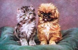 "Persis Kirmse  -  Domestic Pets ""We Two"" : A Kitten & A Puppy    -  3580 - Katten"