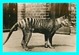 A745 / 267   Loup De Tasmanie N° 124 - Animales
