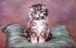 "Persis Kirmse  -  Persian Pussies ""Kitty's Portrait"" : A Smokey- Grey Kitten    -  3581 - Katten"