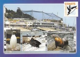 Postcard Living Coasts Torquay Coastal Zoo Penguin And Seal My Ref  B23479 - Torquay