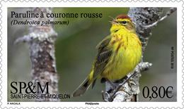 Saint Pierre Et Miquelon - Postfris / MNH - Complete Set Vogels 2018 - St.Pierre & Miquelon